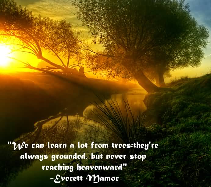 We can learn a lot from trees theyre always grounded but never stop reaching Everett Mamor