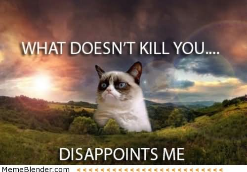 What Doesnt Kill You Disappoints Me Grumpy Cat Meme