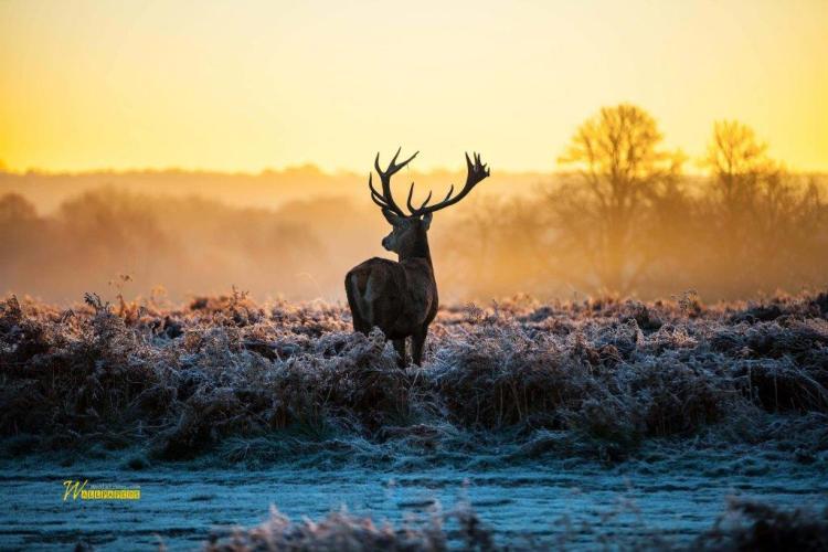 Wonderful Deer At Twilight Full Hd Wallpaper