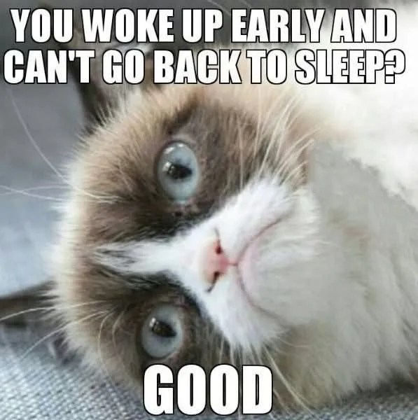 You Woke Up Early And Cant Go Back To Sleep Good Grumpy Cat Meme