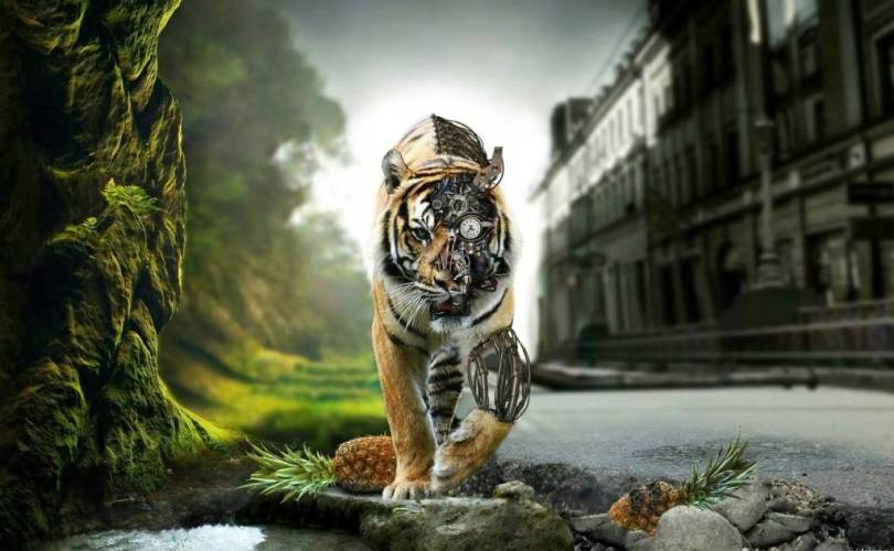 amazing machine Tiger With Exotic Foot Full HD Wallpaper
