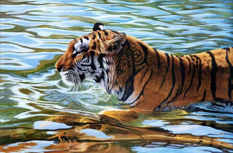 beautiful Wild Tiger In The Water full HD wallpaper