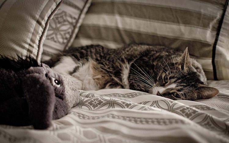 Cute Cat Seems Sad On Bed Full Hd Wallpaper