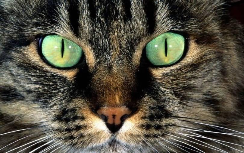 Strange Strong Eyes Of A Stunning Cat Full Hd Wallpaper