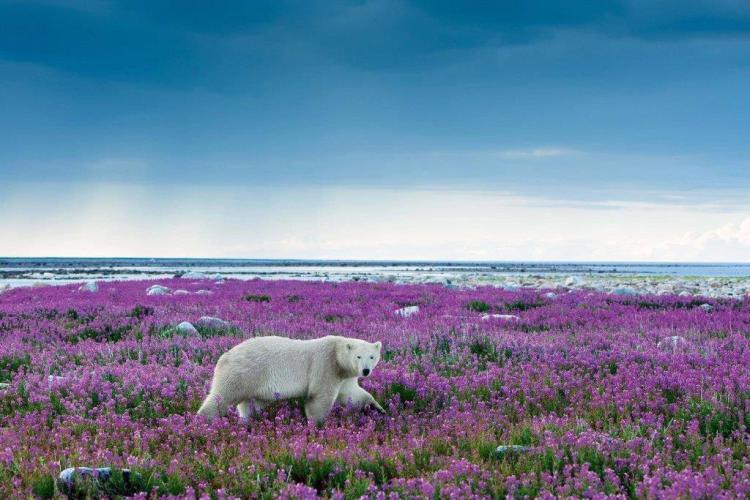 Stunning White Bears Among The Many Flowersfull Hd Wallpaper