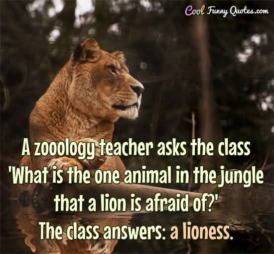 Animal Quotes A zoology teacher asks the class what is the one animal in the jungle that a lion is afraid of