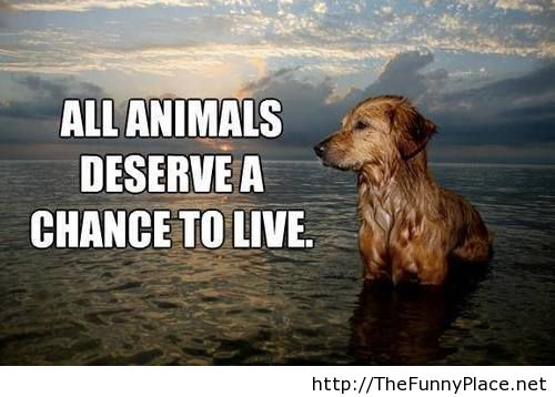 Animal Quotes All animals deserve a chance to live