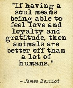 Animal Quotes If having a soul means being able to feel love and lovalty