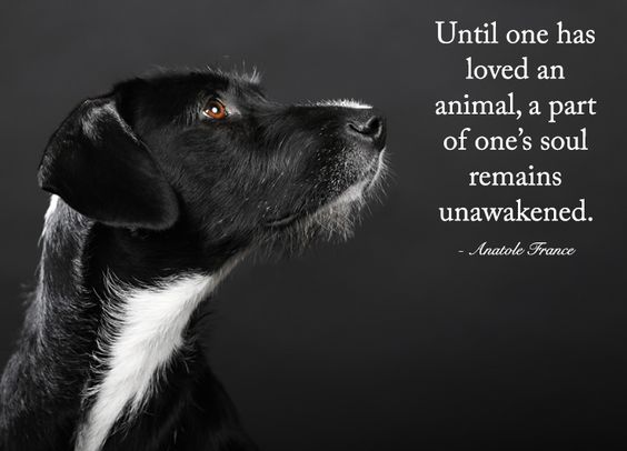 Animal Quotes Until one has loved an animal a part of one's soul remains unawakened. Anatole France