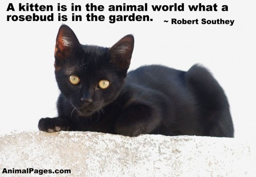 Animal Quotes0047