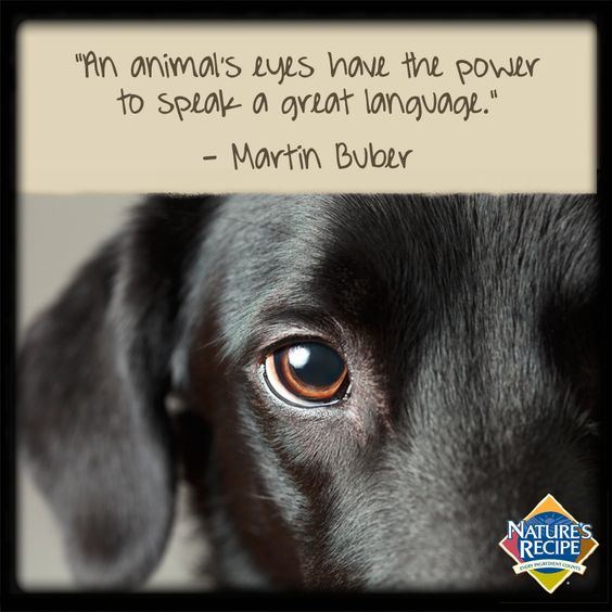 Animal Quotes0042