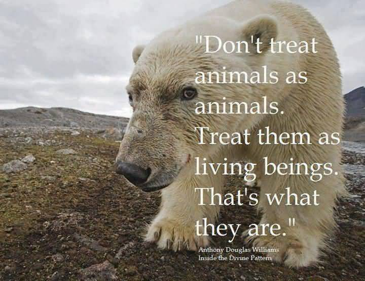 Animal Quotes025