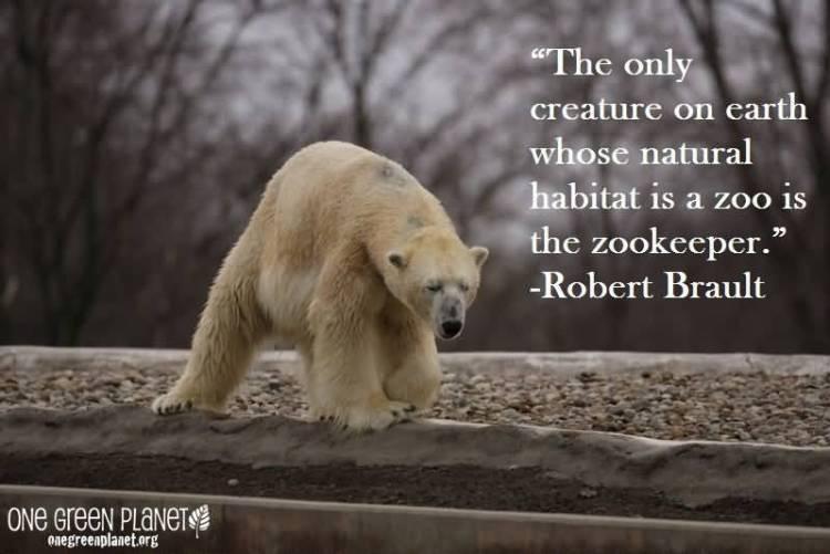 Animal Quotes0053