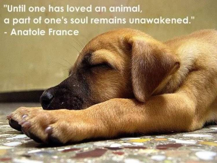 Animal Quotes005