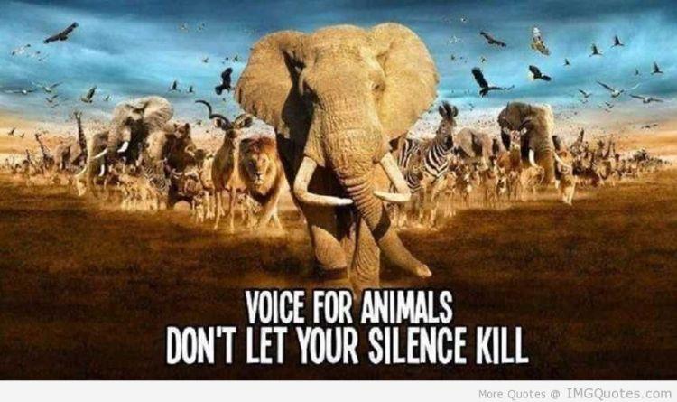 Animal Quotes007