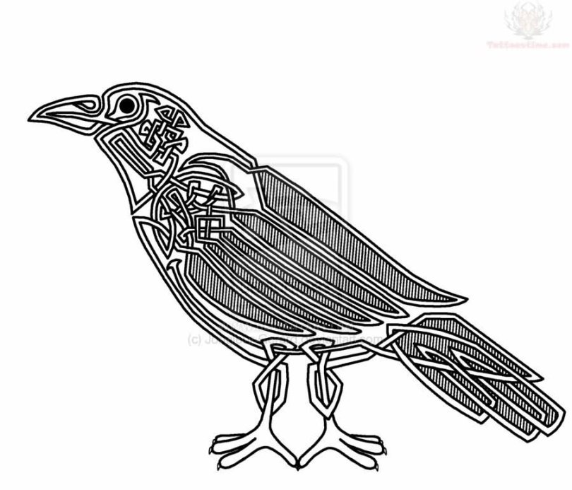 Cute Black Color Ink Outline Celtic Crow Tattoo Sample For Girls