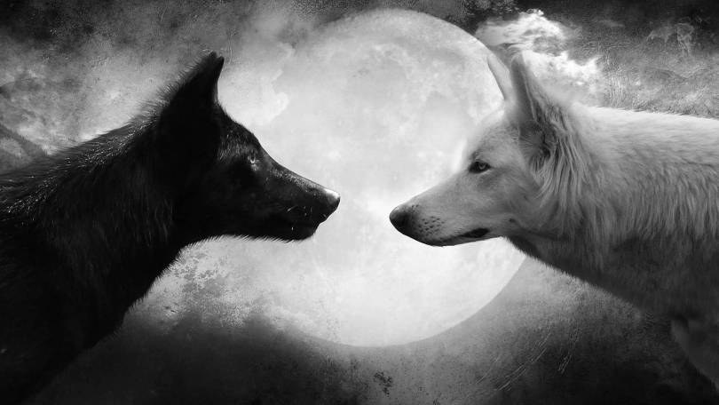 Cute Black Vs White Wolf with moon Full HD Wallpaper