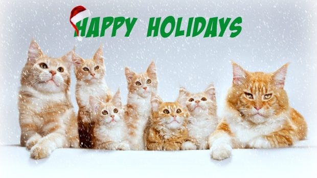 Cute Cats Wishes Happy Holiday Wishes Image