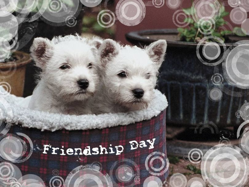 Cute Dog Wishes Friendship Day Image