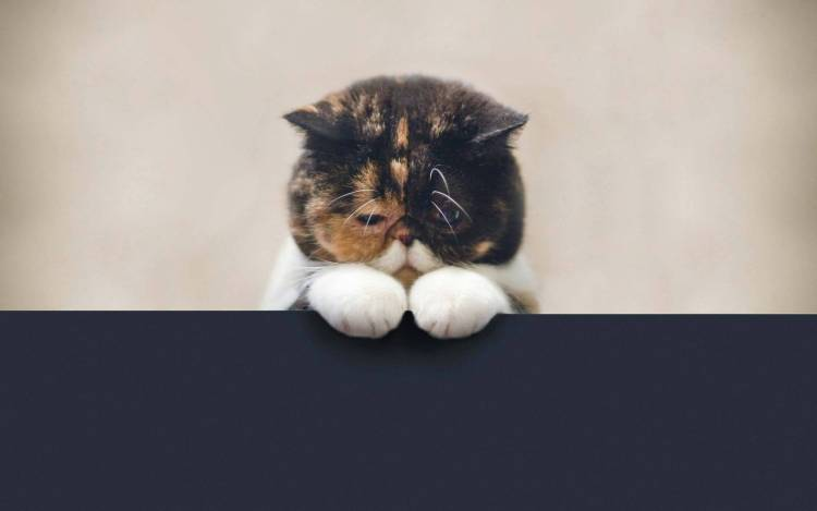 Cute Little Sad Cat Full HD Wallpaper