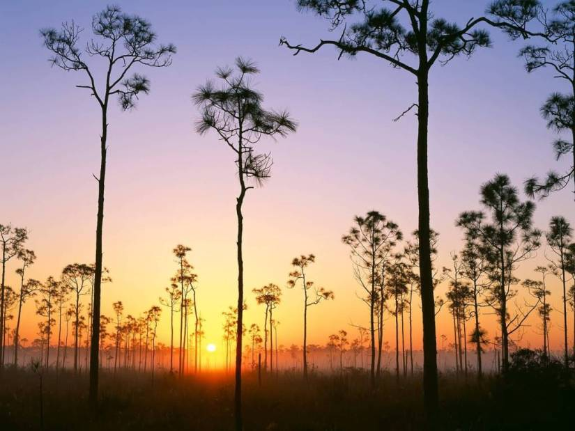 Dashing Silhouetted Pines at Sunrise Everglades National Park Florida 4K Wallpaper
