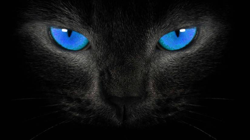 Fantastic Blue Eyes In The Face Of A Black Cat Full HD Wallpaper