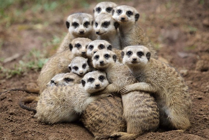 Funny Animals Hugging Image