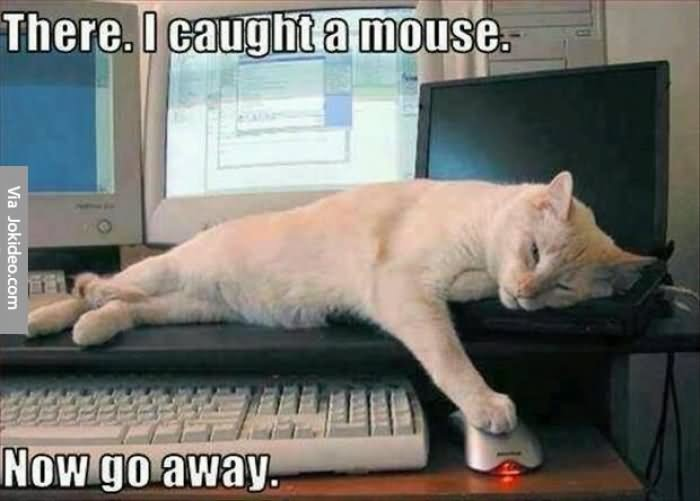 Funny Lazy Memes There I Caught A Mouse Now Go Away