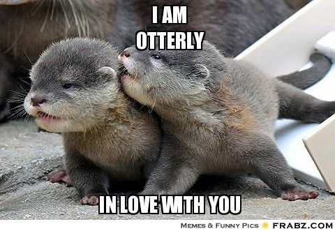 Funny Love Memes I am otterly in love with you