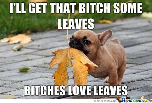 Funny Love Memes I'll get that bitch some leaves bitches love leaves