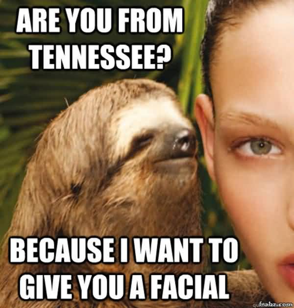Funny Sloth Memes Are you from tennessee because i want to give you a facial