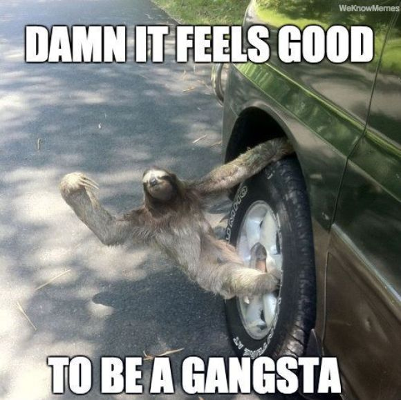 Funny Sloth Memes Damn it feels good to be a gangsta