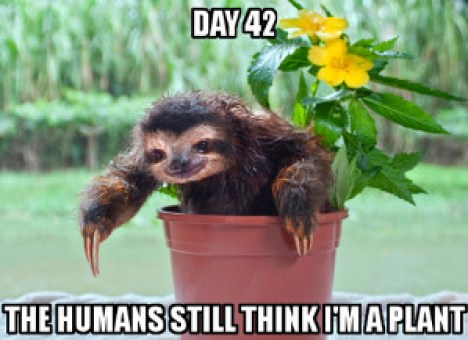 Funny Sloth Memes The humans still think i'm a plant