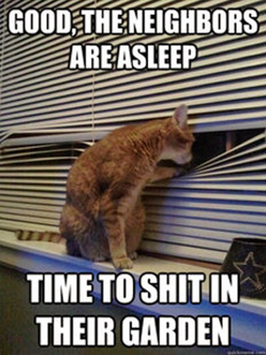 Funny WTF Memes Good The Neighbors Are Asleep Time To Shit In Their Garden