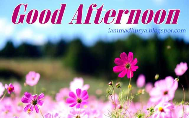 Good Afternoon Greetings Wallpaper