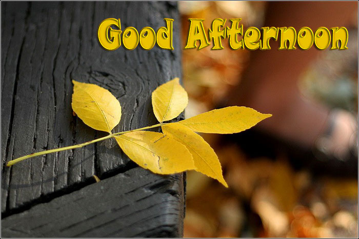 Good Afternoon Wishes Picture