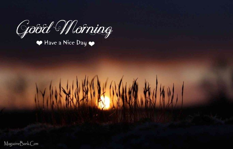 Good Morning Have A Nice Day Wishes Wallpaper
