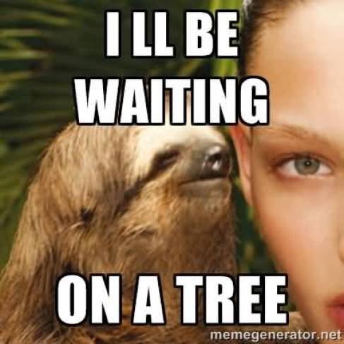 I ll be waiting on a tree Funny Sloth Whisper Memes