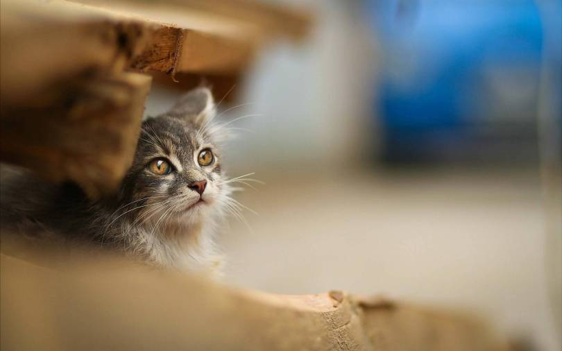 Most Incredible A Small Cat Under Wood Full HD Wallpaper