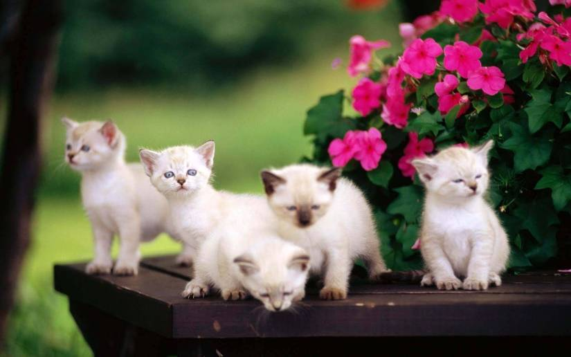 Most Wonderful Five Nice Kittens 4K Wallpaper