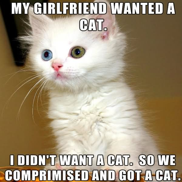 My Girlfriend Wanted A Cat I Didn't Want A Cat So We Compromised And Got A Cat Funny Girlfriend Memes Photos