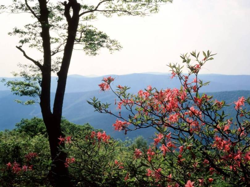 Nice Blue Ridge Mountains North Carolina 4K Wallpaper