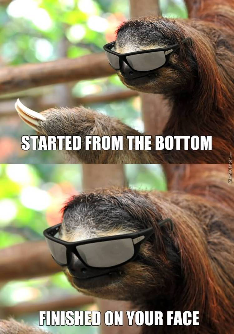 Started from the bottom finished on your face Funny Sloth Rape Memes Images