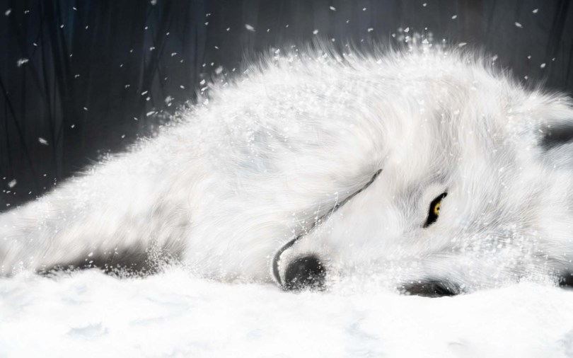 Unique Beautiful White Wolf 4K Wallpaper
