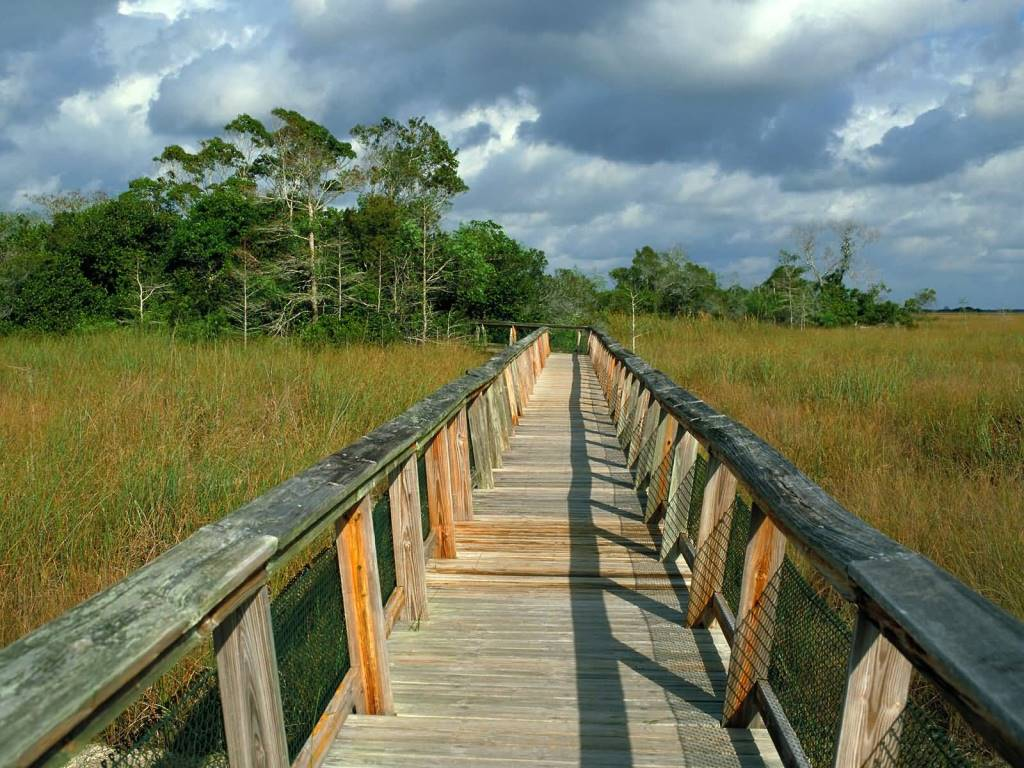 Unique Mahogany Hammock Trail Boardwalk, Everglades National Park Florida 4K Wallpaper