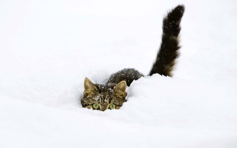 Very Funny Cat Amid Heavy Snow 4K Wallpaper