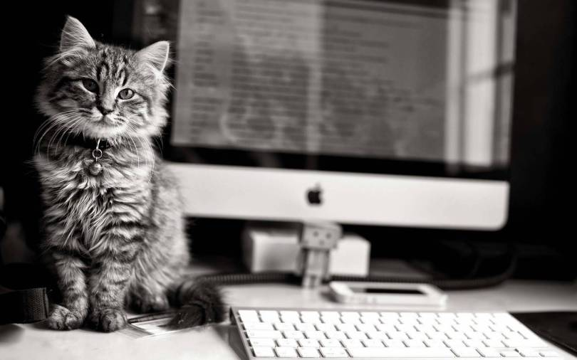 Very Nice Cat Next To The Computer Full HD Wallpaper