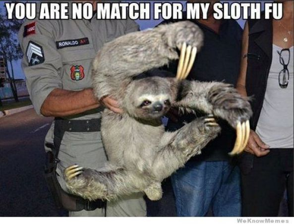 You are no match for my sloth fu Funny Sloth Memes