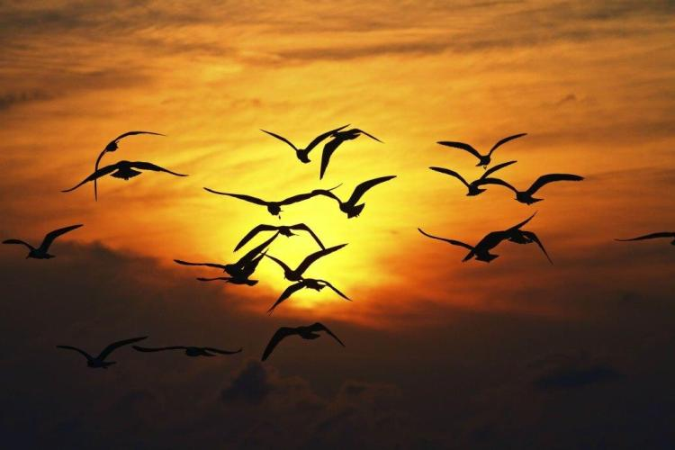 Awesome Several Birds Flying Together