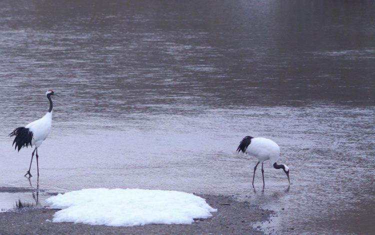 Beautiful White Birds Locking For Food